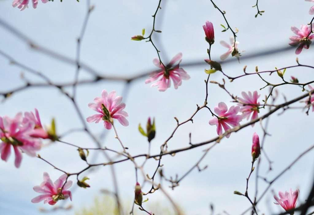 Inspiration May 5 >> Life In Limbo